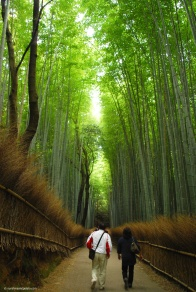 Wandering amongst the towering bamboo trees. So peaceful!