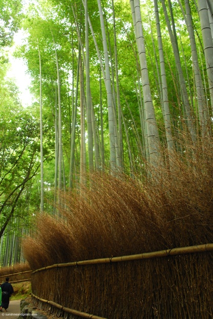 We then headed over to Arashiyama to stroll through this magnificent bamboo grove.