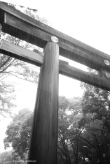 Day 2 involved a walking tour around Tokyo in the rain courtesy of Typhoon Phanfone. This is the Torii gate of Meiji-jingu, a Shinto shrine dedicated to the spirit of Emperor Meiji and his wife. Torii gates are found outside Shinto shrines, and marks the transition from the ordinary to the sacred.