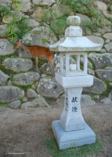Deer roaming the streets outside Itsukushima shrine.