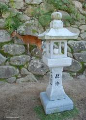 Deer roaming the streets outside Itsukushima shrine.