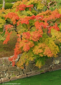 Autumn colours over the inner moat of Nijo Castle