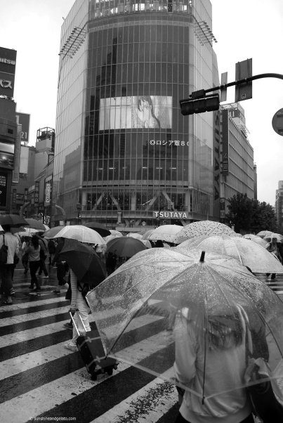 Shibuya crossing, the world's busiest intersection.