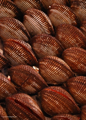 Akagai (red clams)